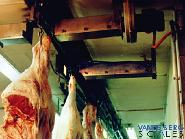 Multiple beef carcasses passing by a Trolley Vision® reader.