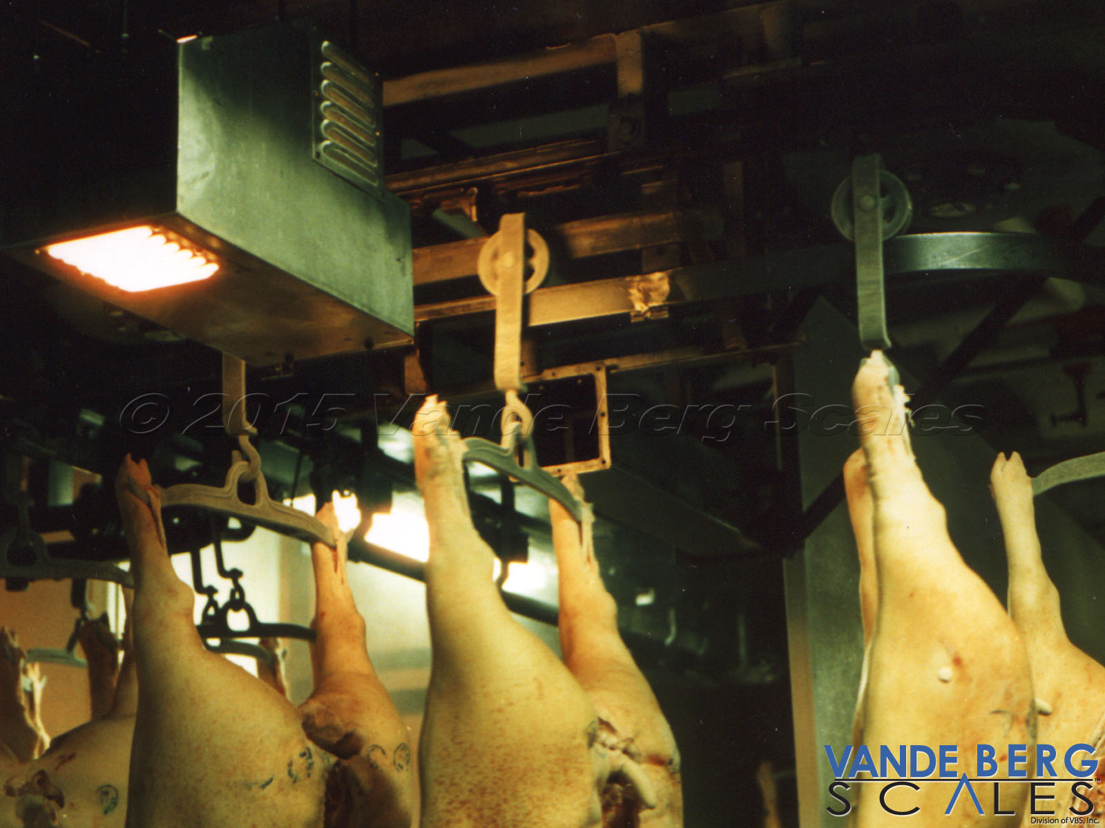 Pork carcasses passing in front of a Trolley Vision® reader.
